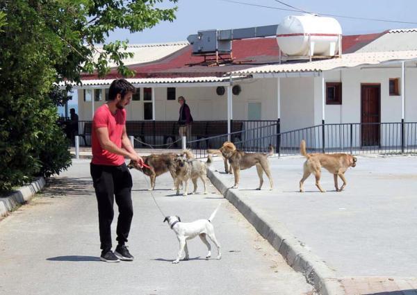 Başıboş köpeklerden korkan İzmirliler, çareyi köpek savarda buldu