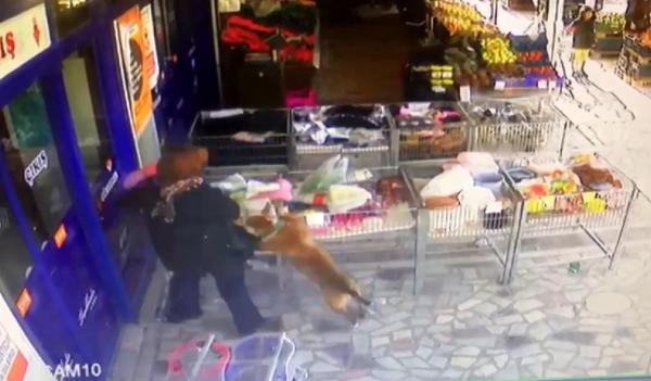 Ankara'da pitbull dehşeti! Anneannesinin kucağındaki küçük kızı zıplayıp yakaladı