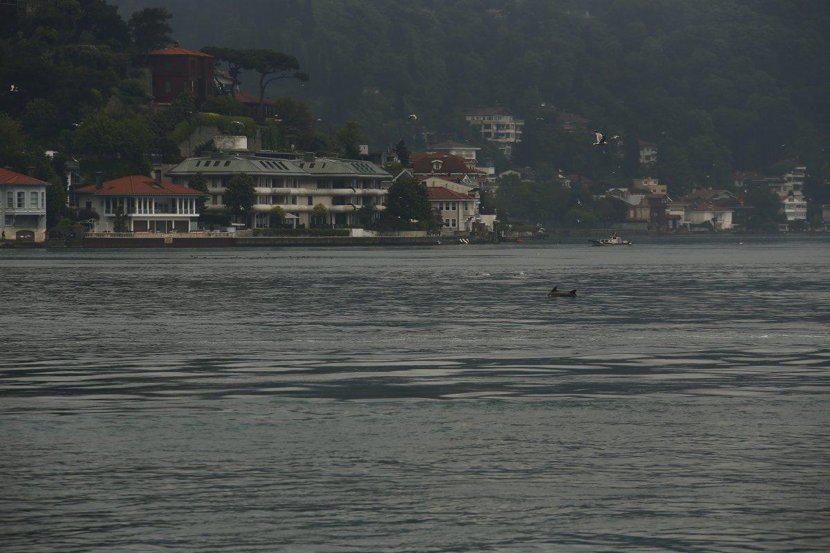İstanbul Boğazı nda, yağmurla birlikte yunus balıkları görüldü #1