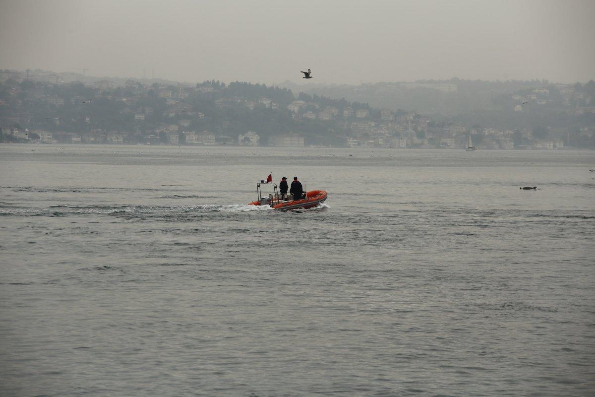 İstanbul Boğazı nda, yağmurla birlikte yunus balıkları görüldü #3