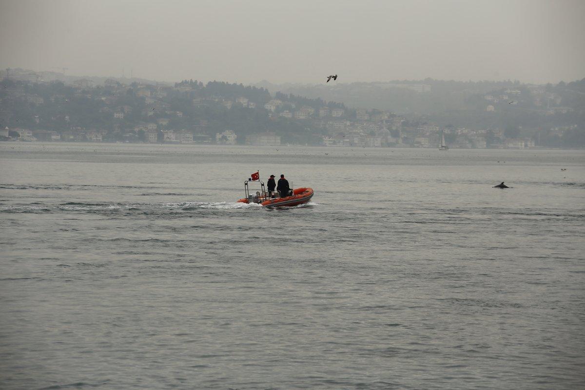 İstanbul Boğazı nda, yağmurla birlikte yunus balıkları görüldü #4