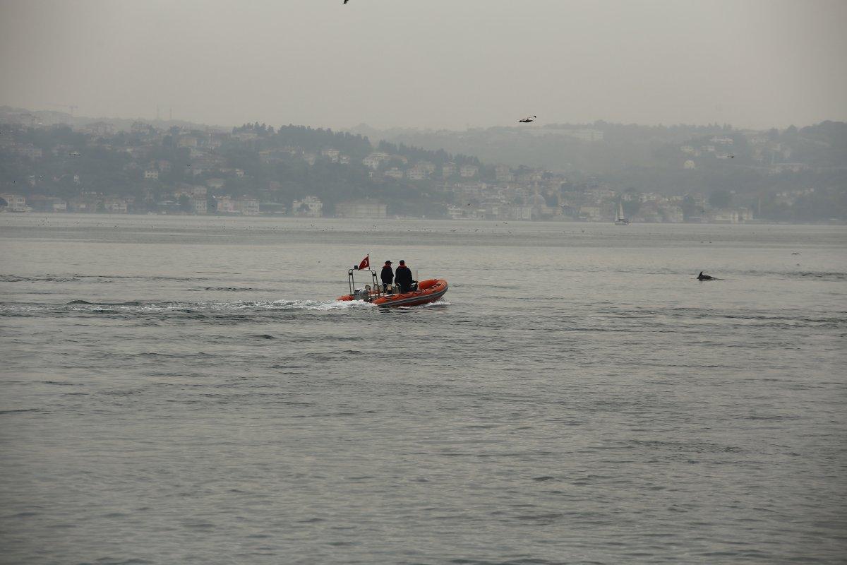 İstanbul Boğazı nda, yağmurla birlikte yunus balıkları görüldü #5