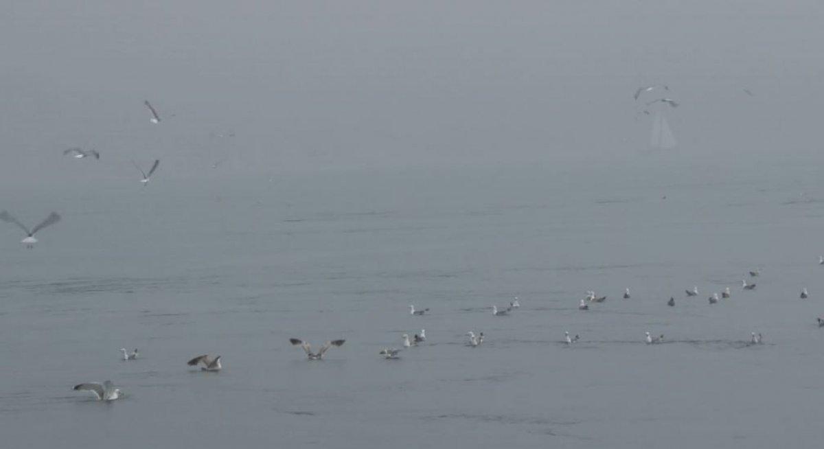İstanbul Boğazı nda, yağmurla birlikte yunus balıkları görüldü #7