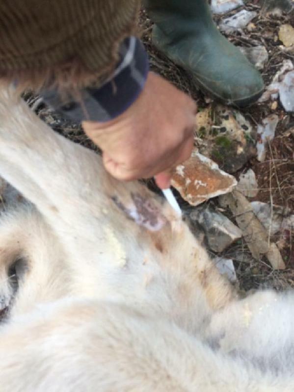 Köpeğini 'fazla ekmek yiyor' diye öldürdü, bin 33 lira ceza kesildi