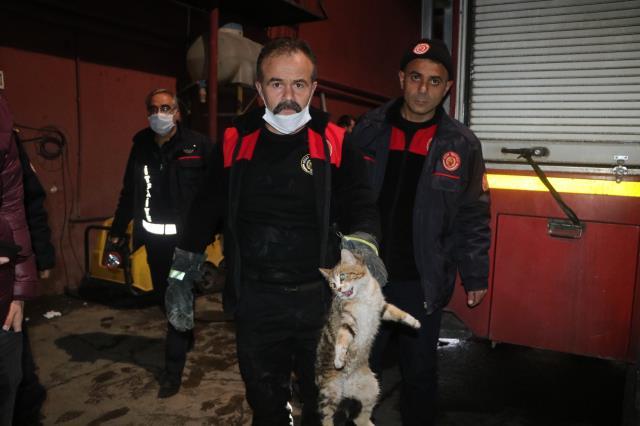 Hırçın kedi ekipleri alarma geçirdi, çıkması için hamsi bile verdiler